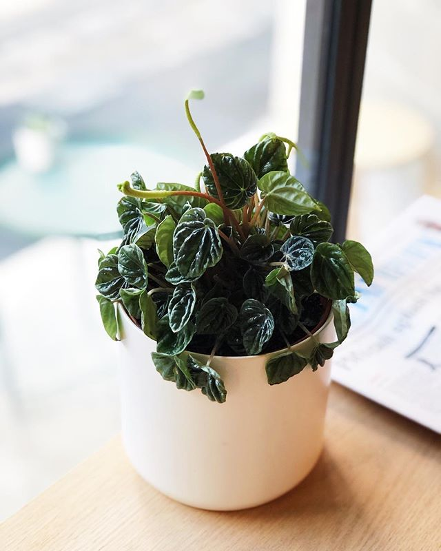 Plants literally bring life to your home or work space...and you can never have to many 👌