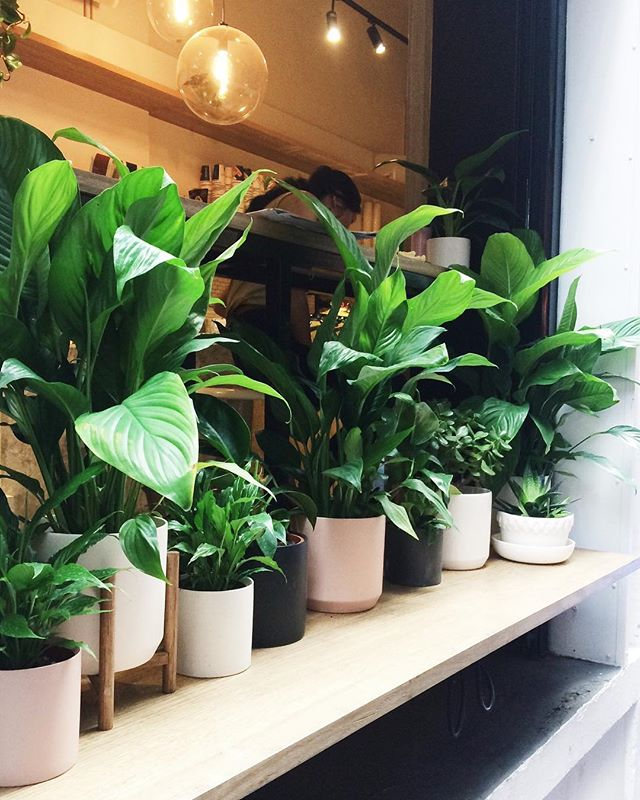 Come join our plant gang for cawfee 👌 ⠀⠀⠀⠀⠀⠀⠀⠀⠀ ⠀⠀⠀⠀⠀⠀⠀⠀⠀