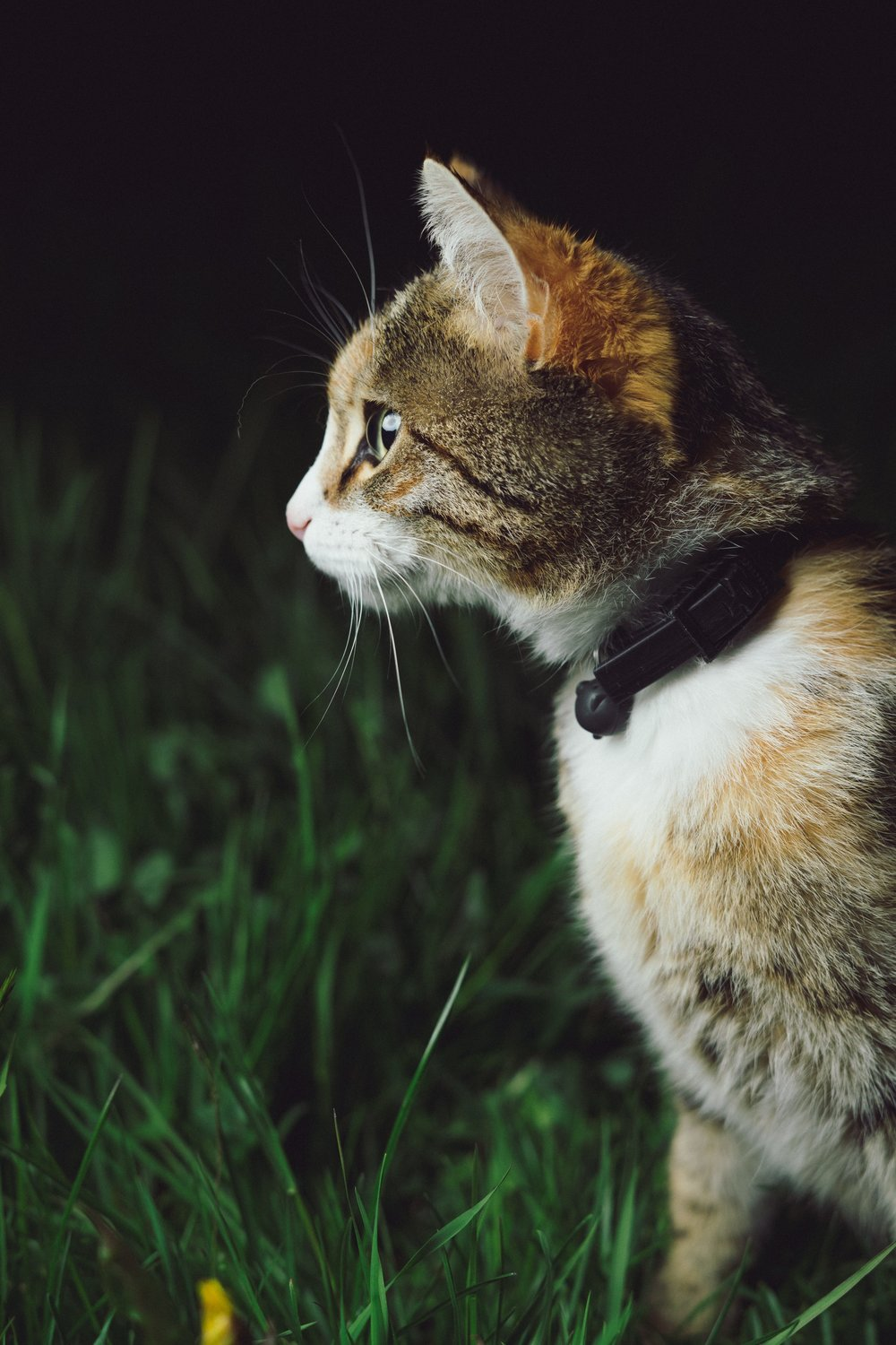 3 Quick And Easy Spells For The Animal Loving Witch // Witchcraft // Magic // The Traveling Witch