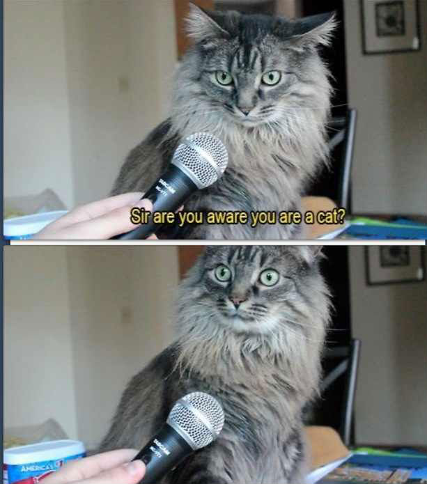 sir-are-you-aware-you-are-a-cat.jpg