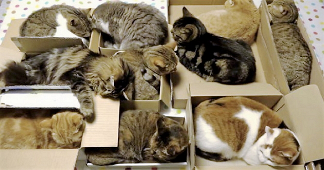 Cats-Love-Boxes-1.jpg
