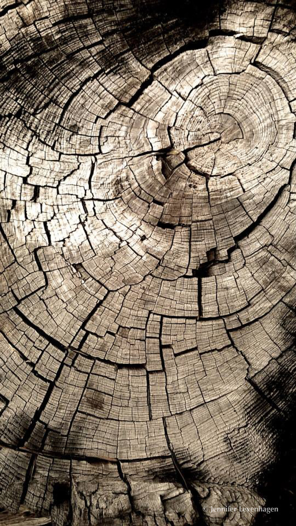 Daily Art from FB Tree Rings copyright.jpg