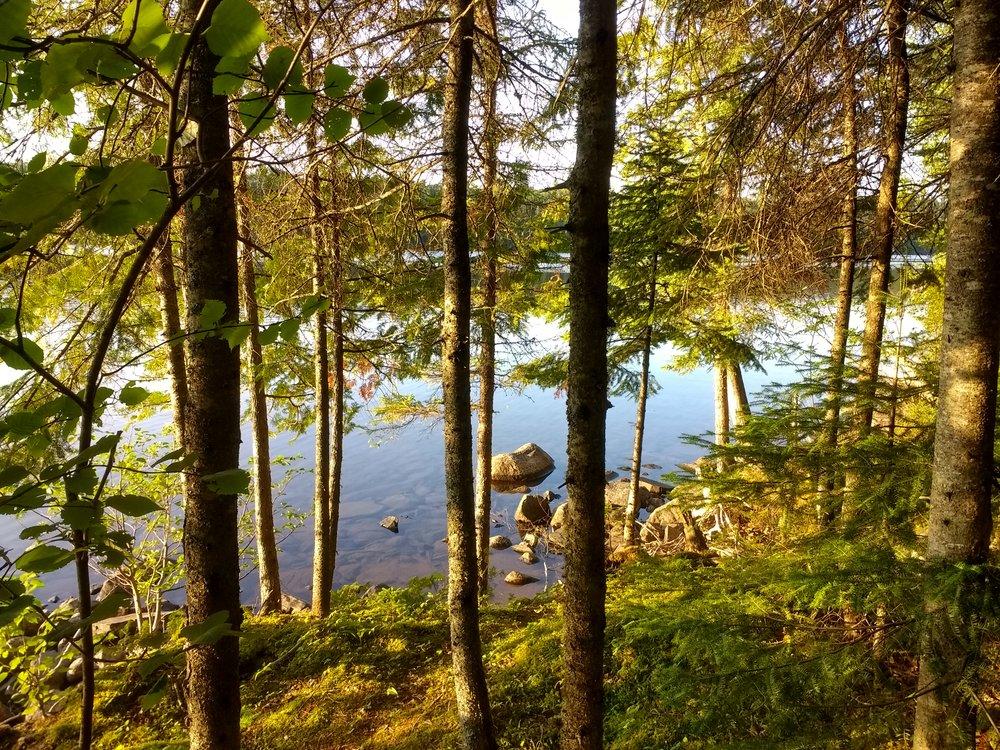 loon lake shoreline IMG_20180807_192033957_HDR.jpg
