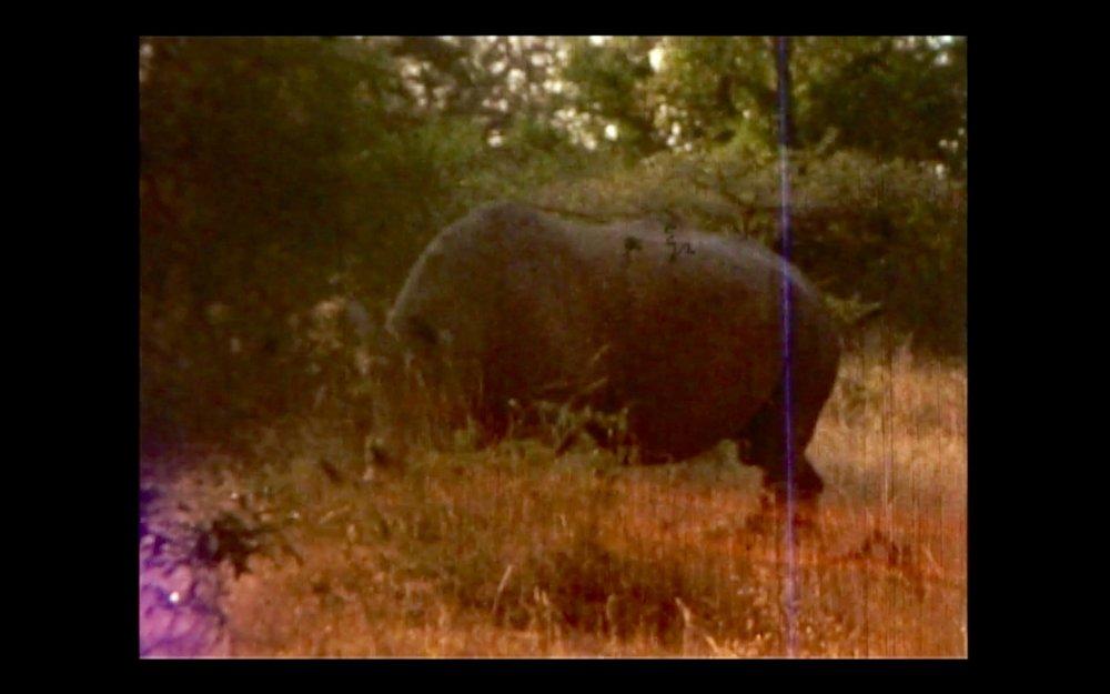 Rhino 2.jpg