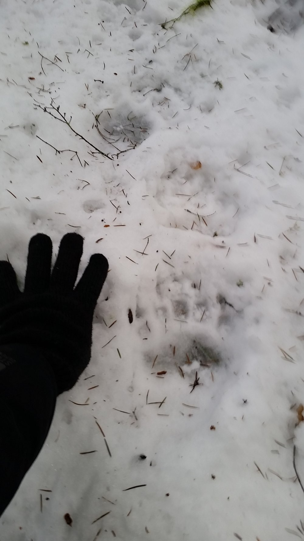Tracks from the bear who led me.