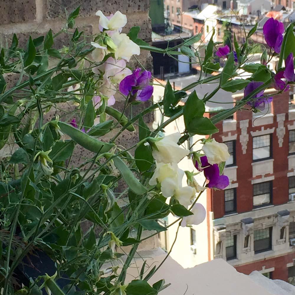 One Fifth Avenue Apt. 16B Flowers on Terrace