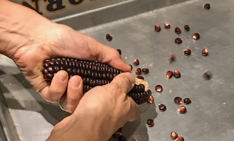 The kernels are handpicked from the cob.
