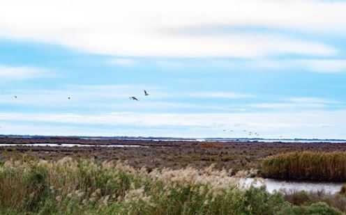 Wetlands Pic.JPG