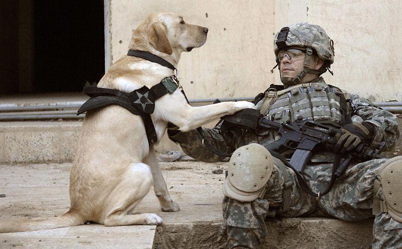 800px-Iraq_dog.jpg