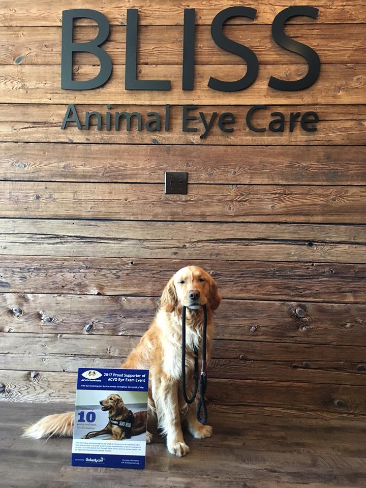 "Bliss Animal Eye Care, ""Maks"""