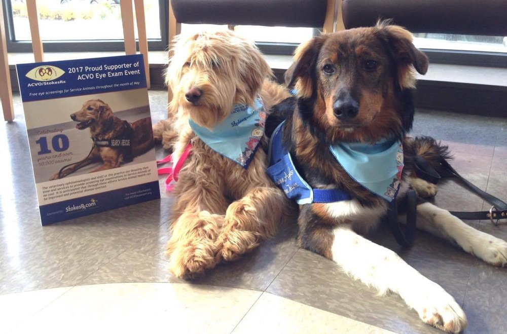 Bindi & Finn at Animal Eye Clinic of Spokane