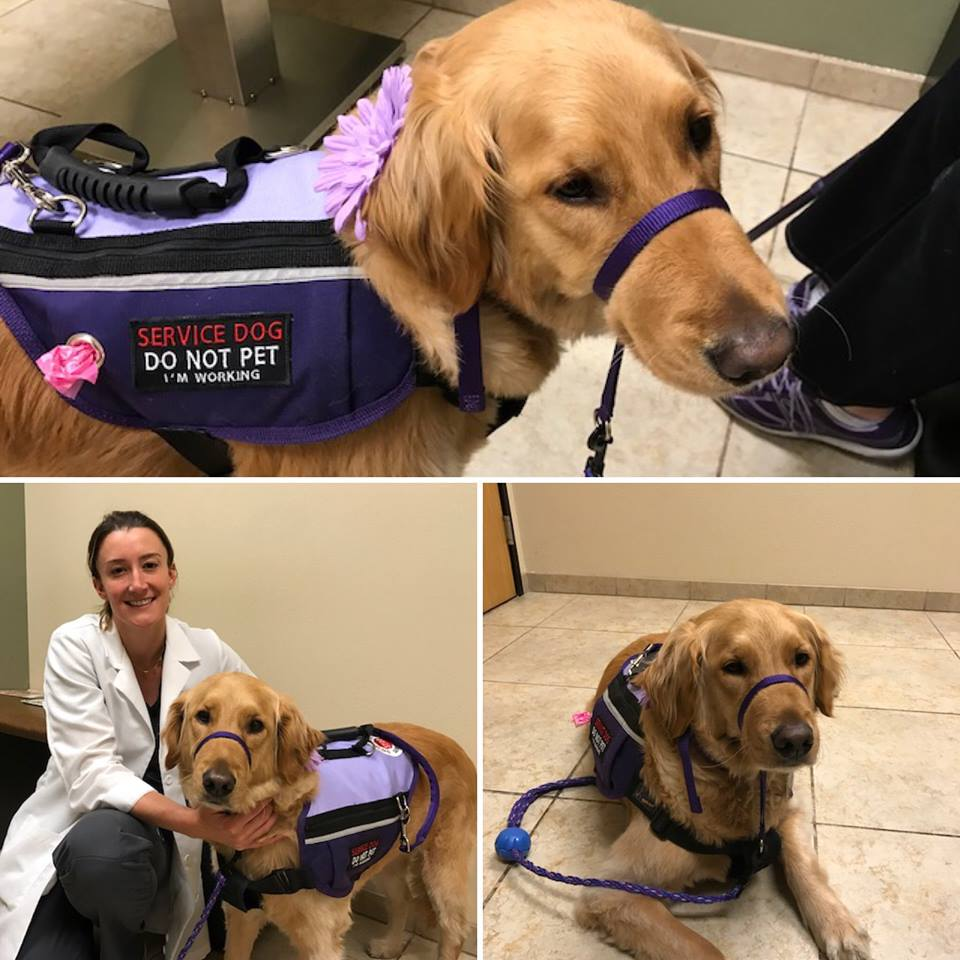Dr. Francesca Venturi with Elsa, Eye Care for Animals, San Diego, CA