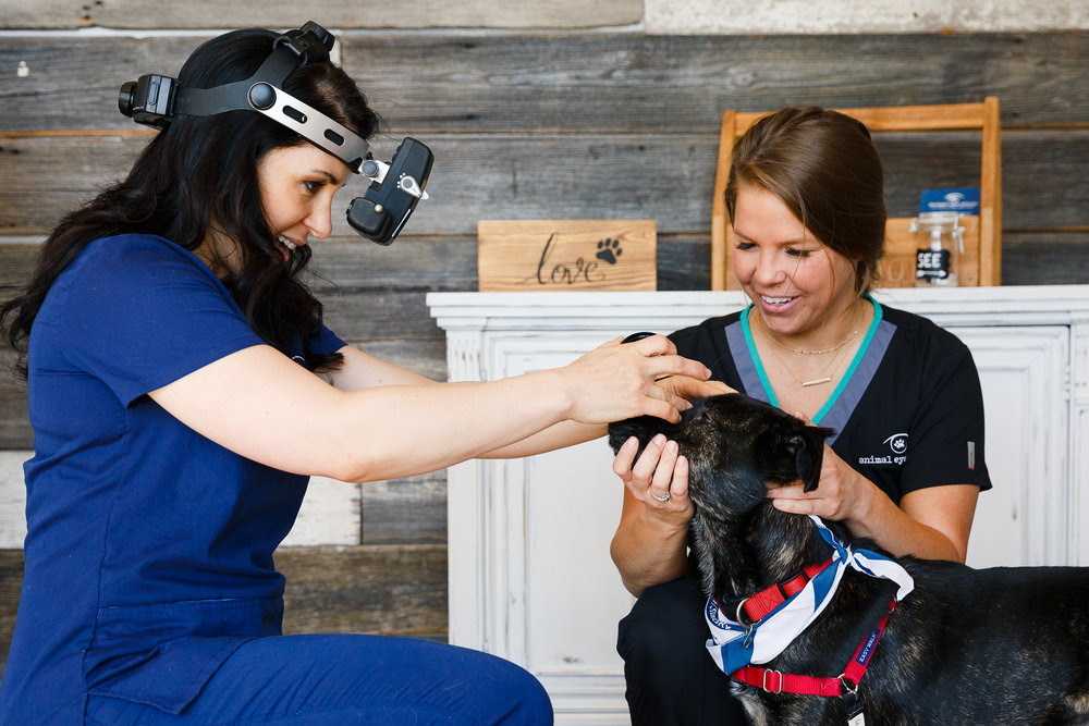 Dr. Rachel Davis with the Animal Eye Clinic of Westfield, IN. (2018 exam program photo)