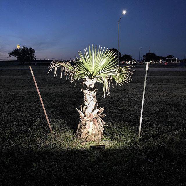 A special palm.