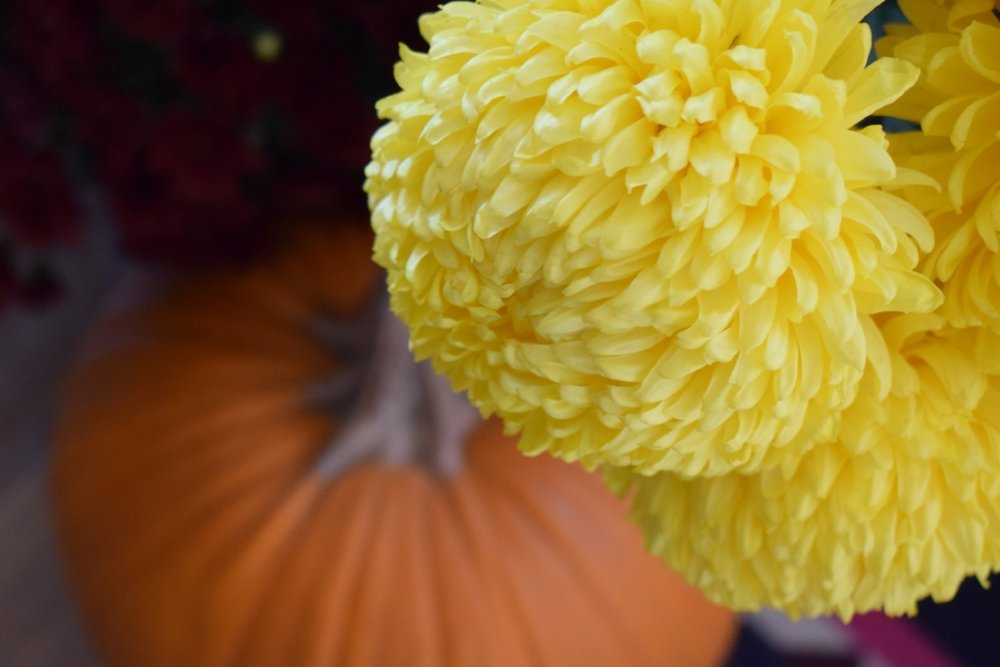 Chrysanthemums - 9 - 10 pcs depending on the size of the flowers