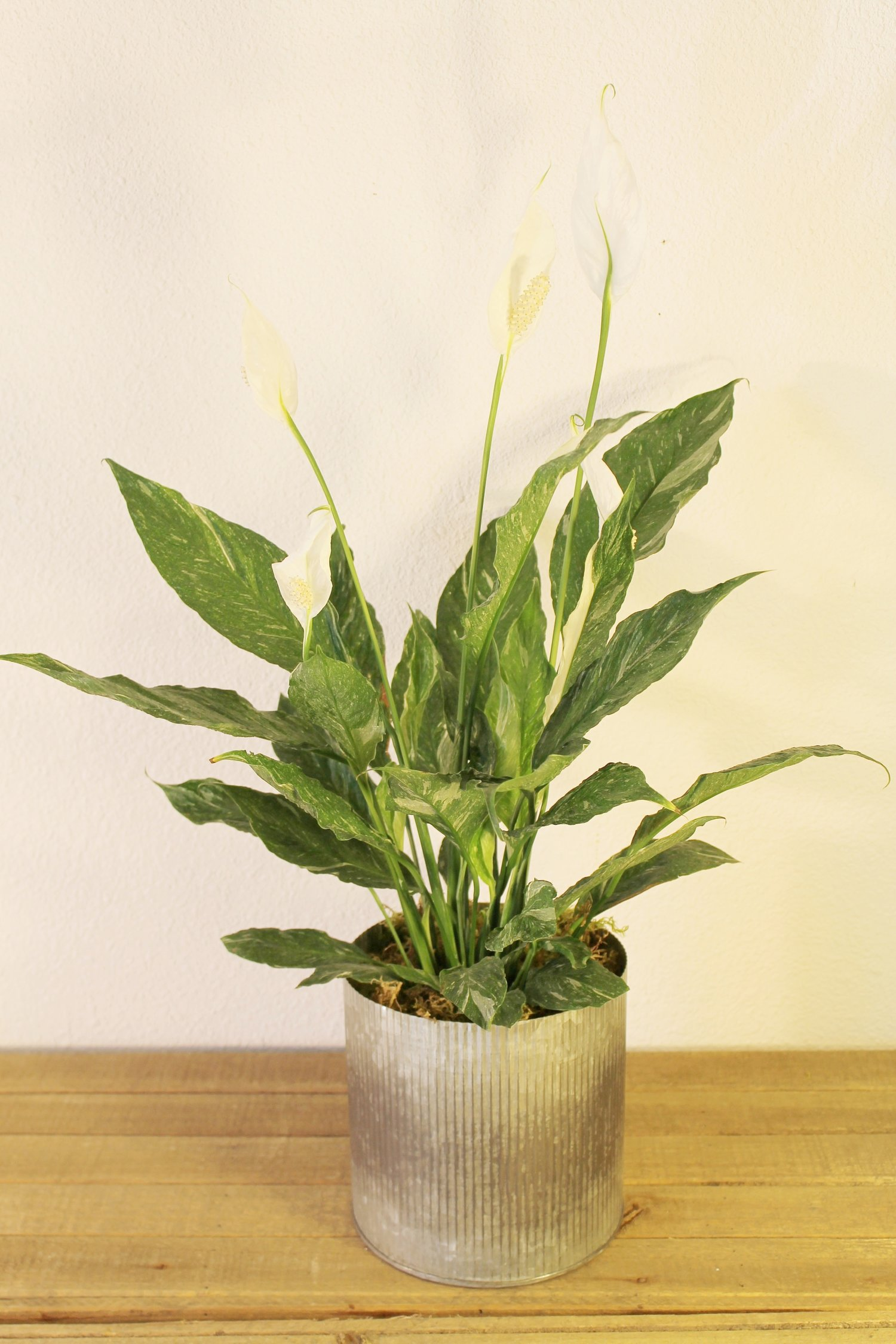Peace Lily Stems Floral Design