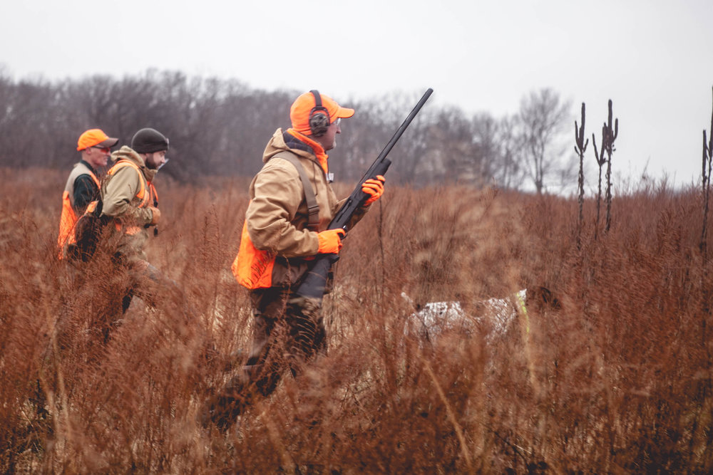 Quail Hunting in Field with Dogs 01