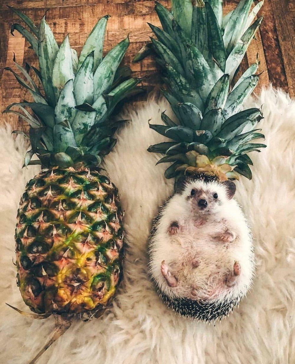 putyouinabettermood :     Prickly fruit via  https://ift.tt/2J6oAKk  putyouinabettermood.com