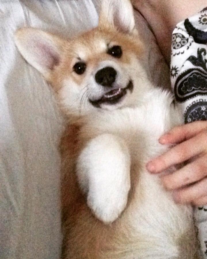 daunicorncat :   Say hello to my doggo, Sassi❤