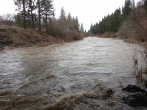 Hangman Creek from the 11th bridge, flowing at 2,100 cfs on 2/10/15.