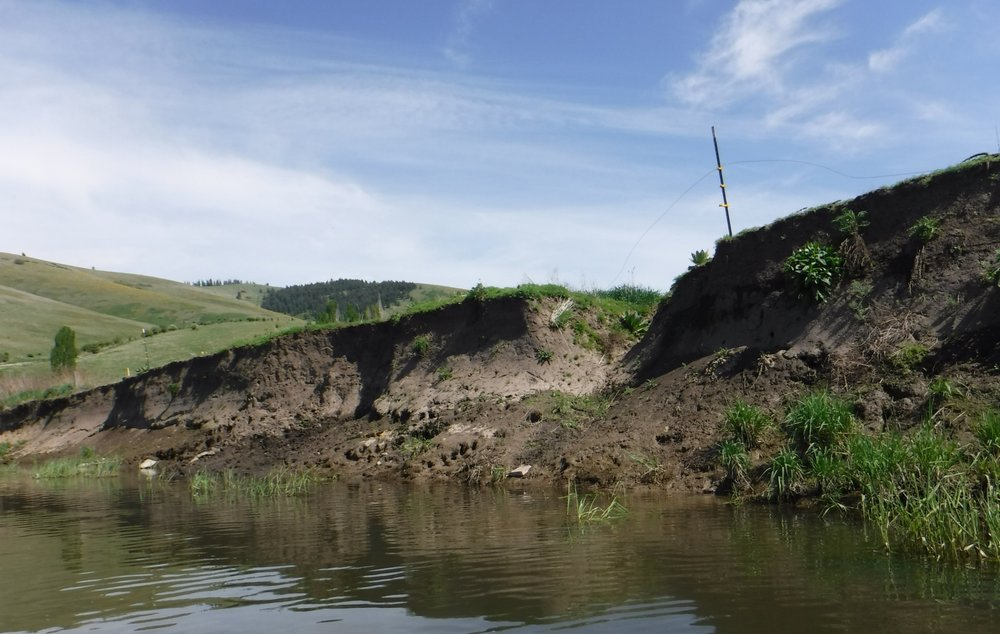 Cattle and horses in the creeks and on the banks tramples vegetation and pollutes the rivers