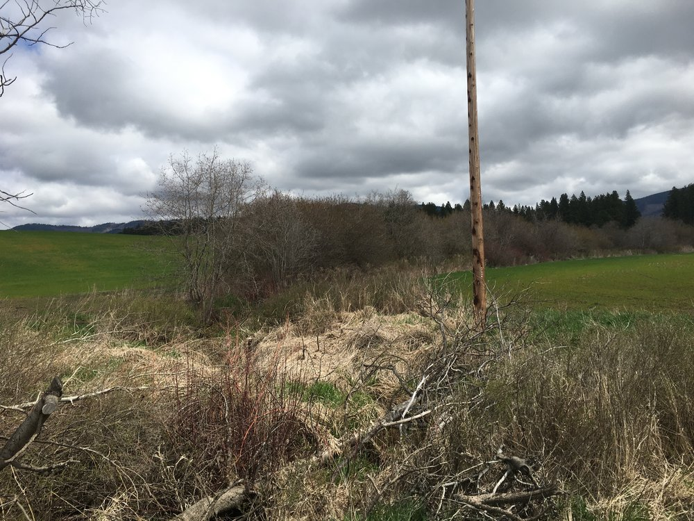 The Coeur d'Alene Tribe uses streamside vegetation, no-till farming, and grassy buffers to protect water quality.