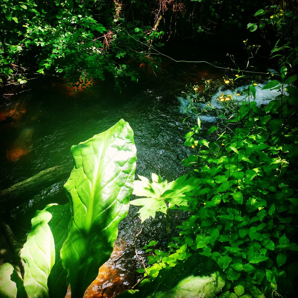 Streamside vegetation provides habitat and clean, cool water.