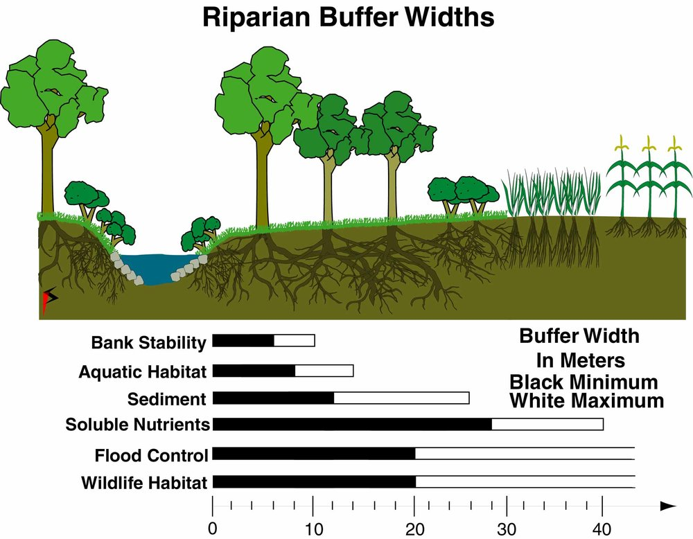 Riparian buffers widths serve different functions in an ecosystem.