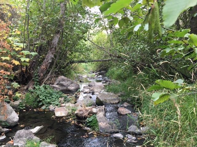 Cali Creek.JPG