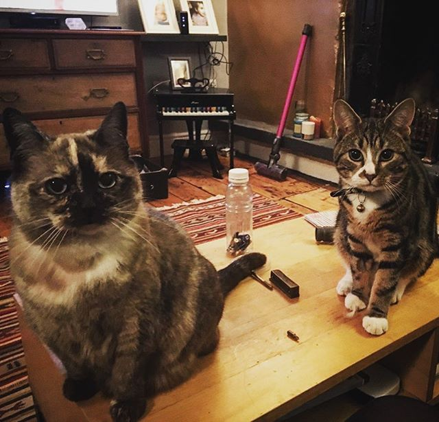 Hutton house's helpers - I think they're after something #kitten #cat #thestare