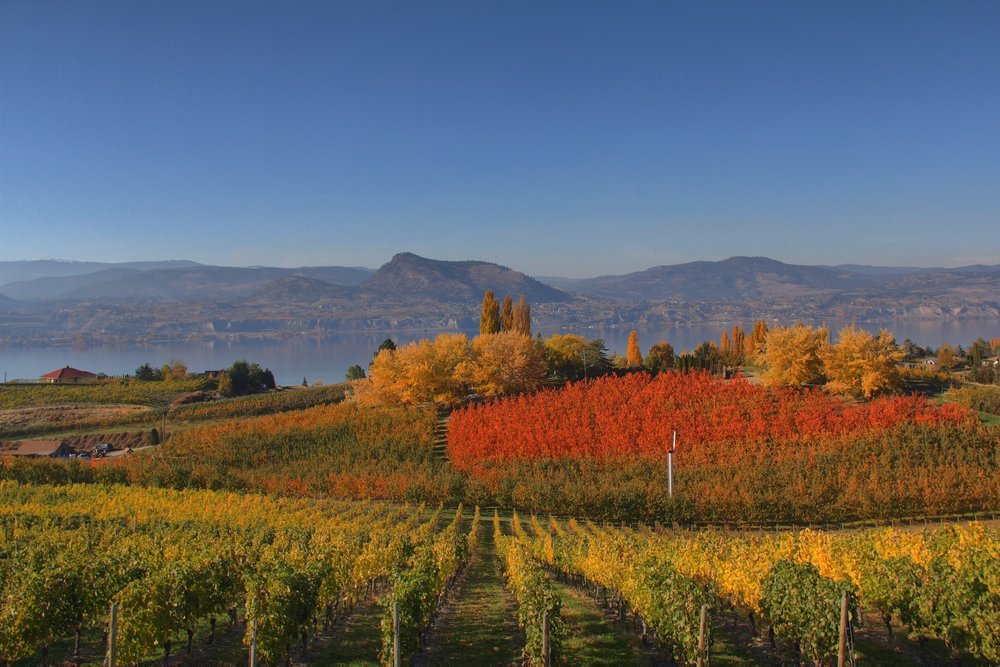 Fall Foliage in Naramata