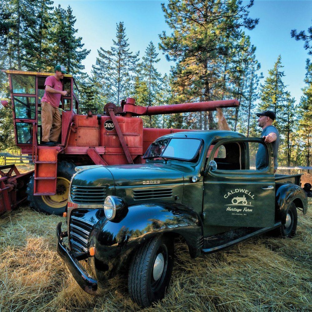 Red-Fife-pumped-into-truck-at-Wiseacre-Farm-Photo-by-David-McIlvride.jpg