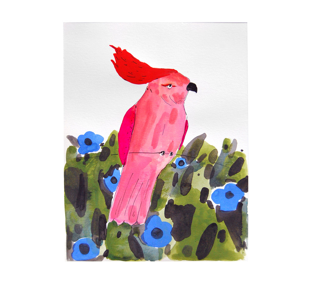 Leadbetter Cockatoo