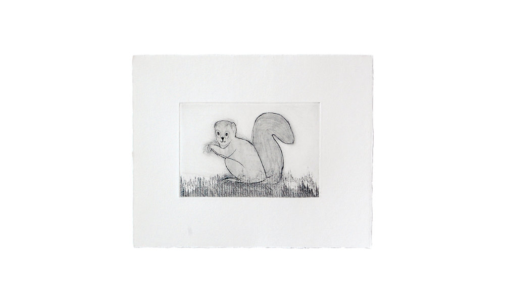 """Grey Squirrel, etching, 8"""" x 10"""" (framed), $150    Contact us for purchase"""