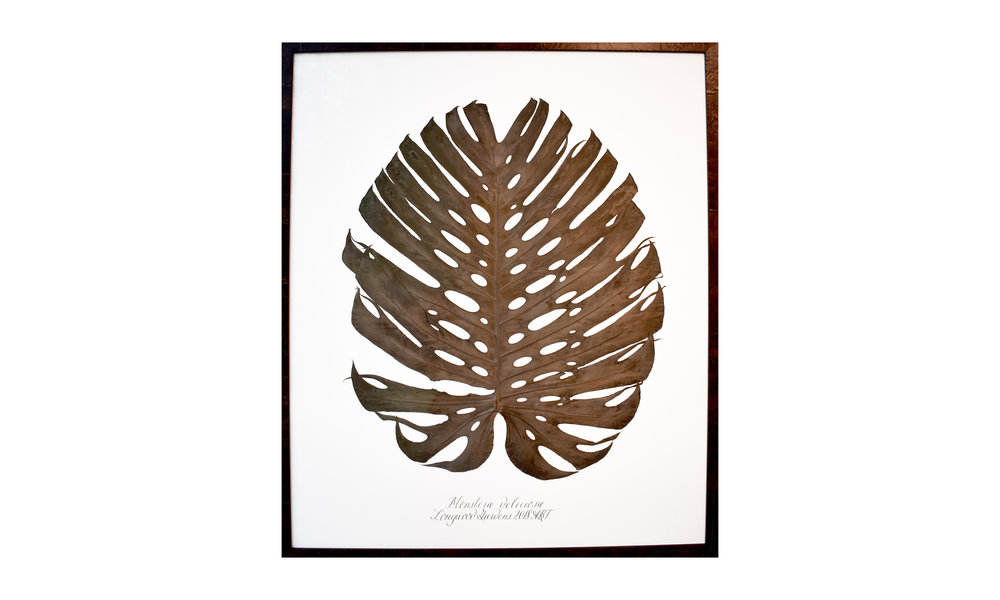 Monstera deliciosa,  42 x 50 inches, $ 3,800    Contact us for purchase