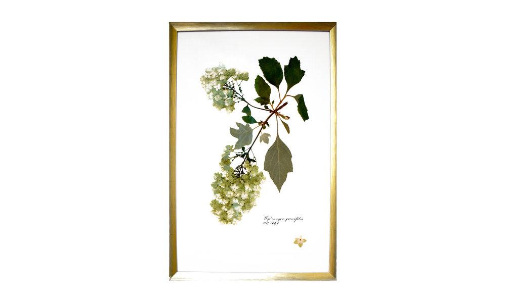 Hydrangea quercifolia , 16.5 x 25 inches, $ 1,200 SOLD