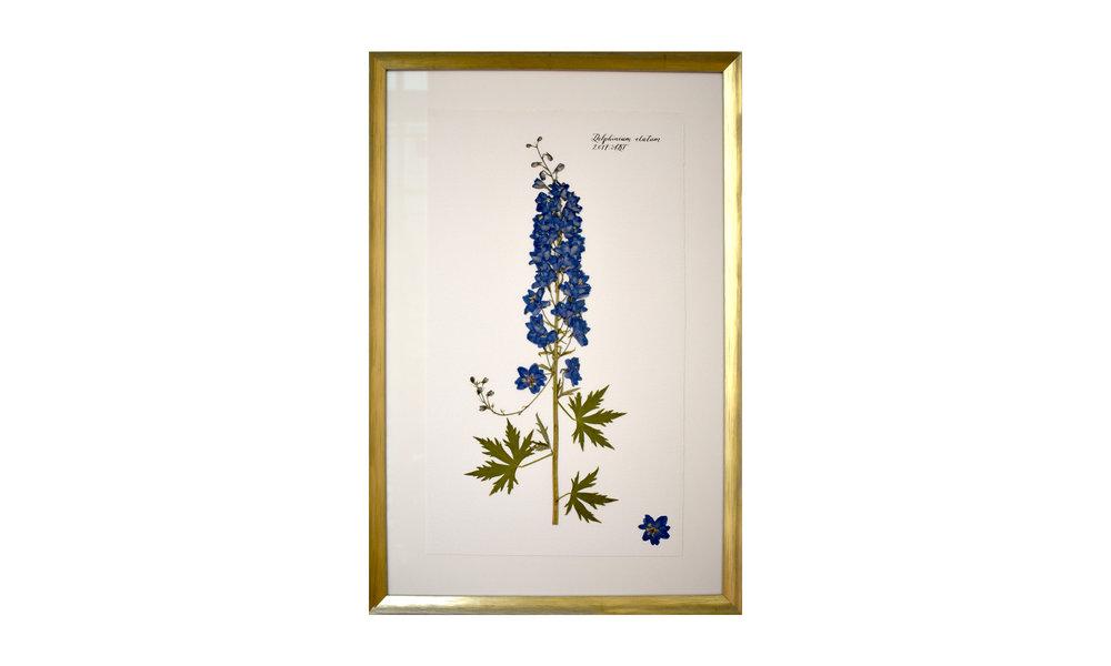 Delphinium elatum,  16.5 x 25 inches, $ 1,200    Contact us for purchase
