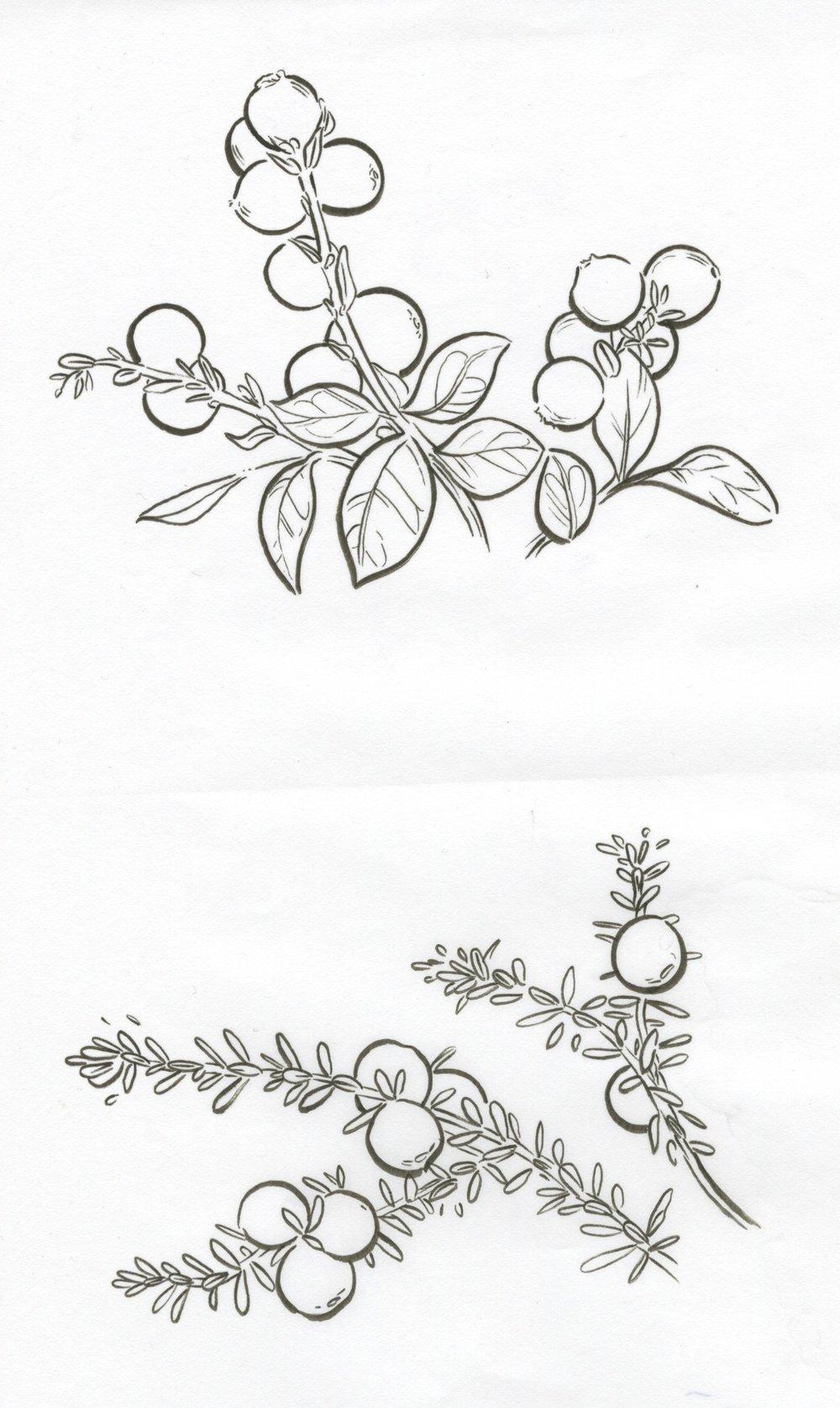 crowberries and cranberries.jpeg
