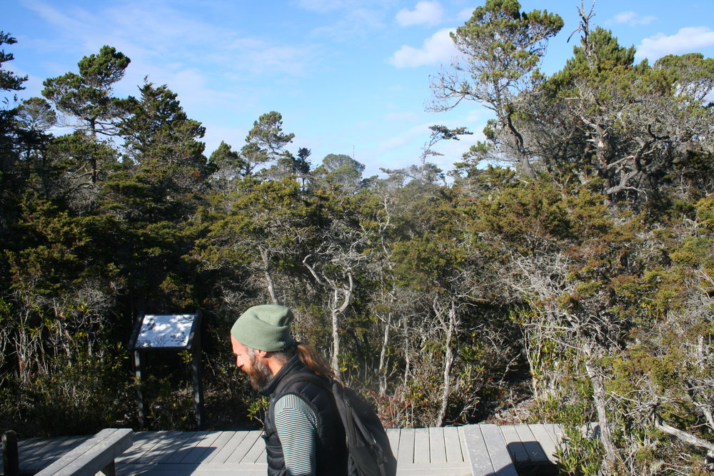 Ed in Pygmy Pine forest