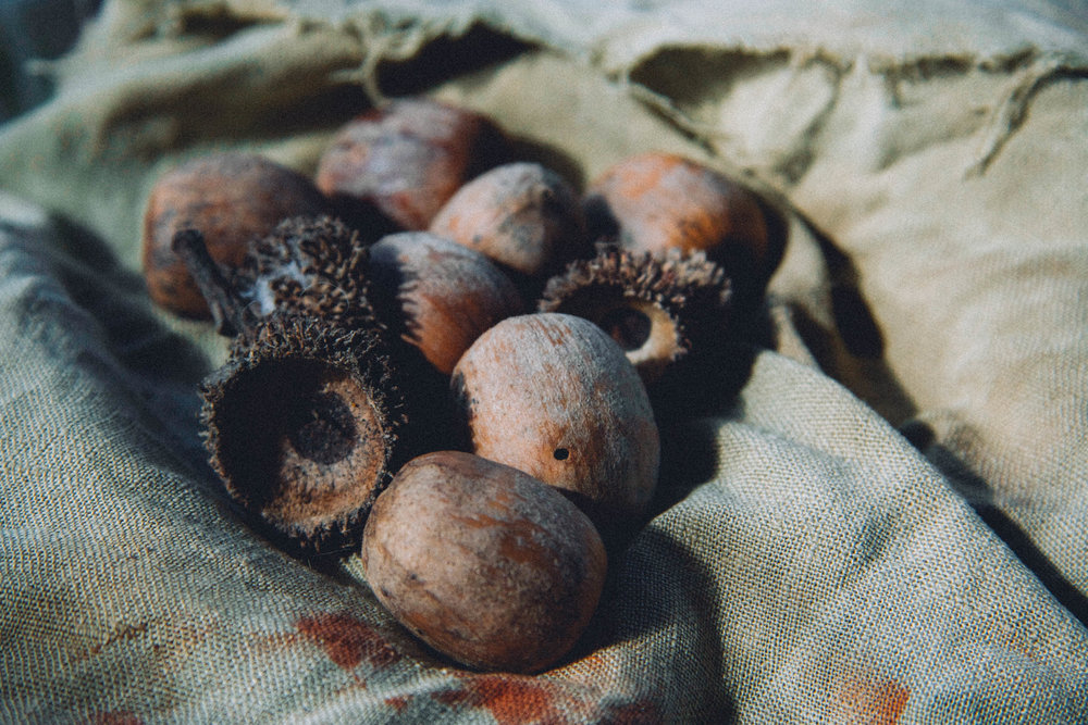 Tanbark cup and acorns.
