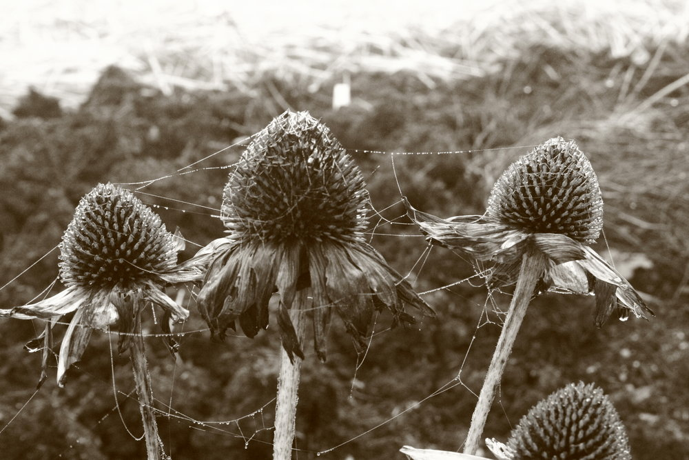 dec 2011-farms 003.jpg