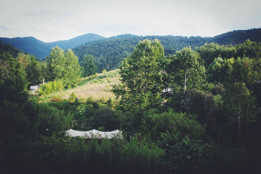 More views from the cobb cottage hill towards the rest of the farm in various stages of being reforested or being established by the first succession species like Wild Cherry, Blackberry and some Multiflora Rose. Outside of Asheville, NC.