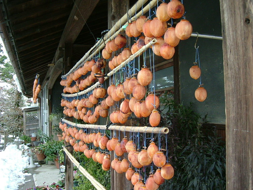 Drying Persimmons Hoshigaki style - Hachiya variety.  photo credit: Sakurai Midori [CC BY-SA 2.1 jp (https://creativecommons.org/licenses/by-sa/2.1/jp/deed.en), GFDL (http://www.gnu.org/copyleft/fdl.html) or CC-BY-SA-3.0 (http://creativecommons.org/licenses/by-sa/3.0/)], from Wikimedia Commons