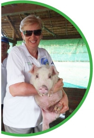 A PIG TO PROVIDE INCOME FOR A FAMILY$100 -