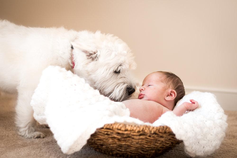 Virginia Newborn and Family Lifestyle Portrait Photograph