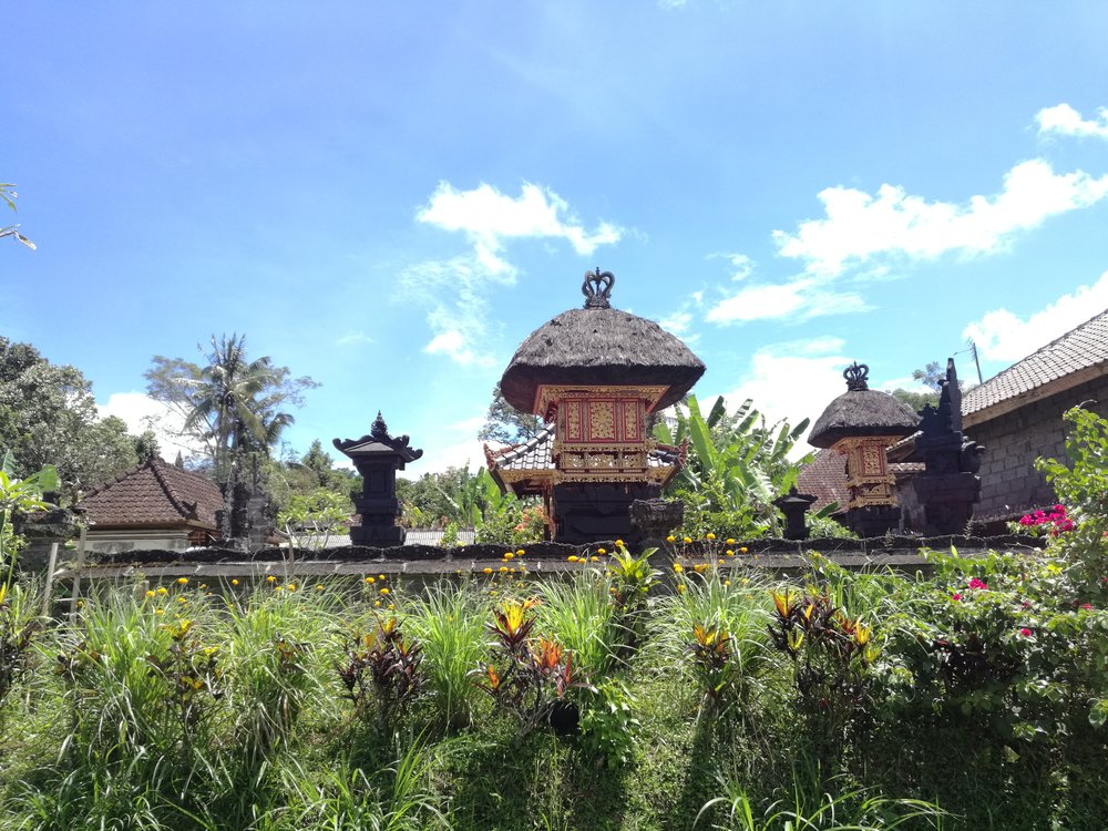 A view of Rumah Mojan and the surrounding rice fields
