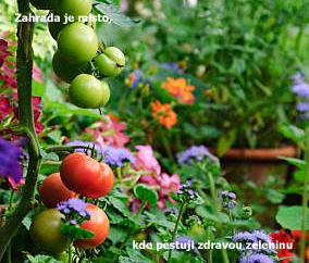 zelenina.jpg