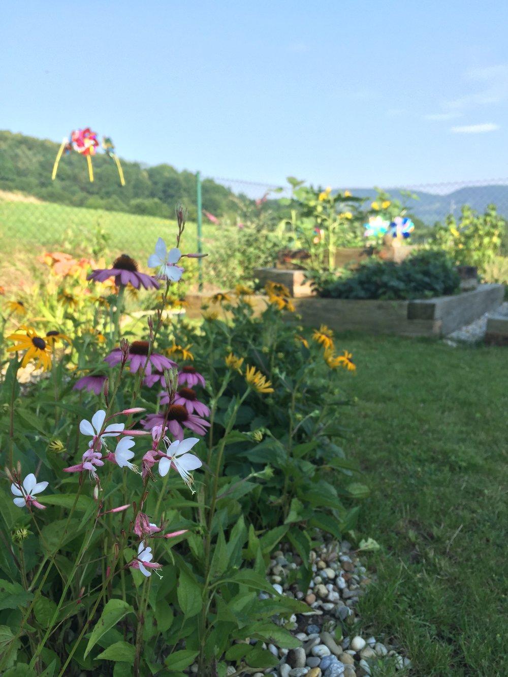 Kvetoucí záhony s trvalkami