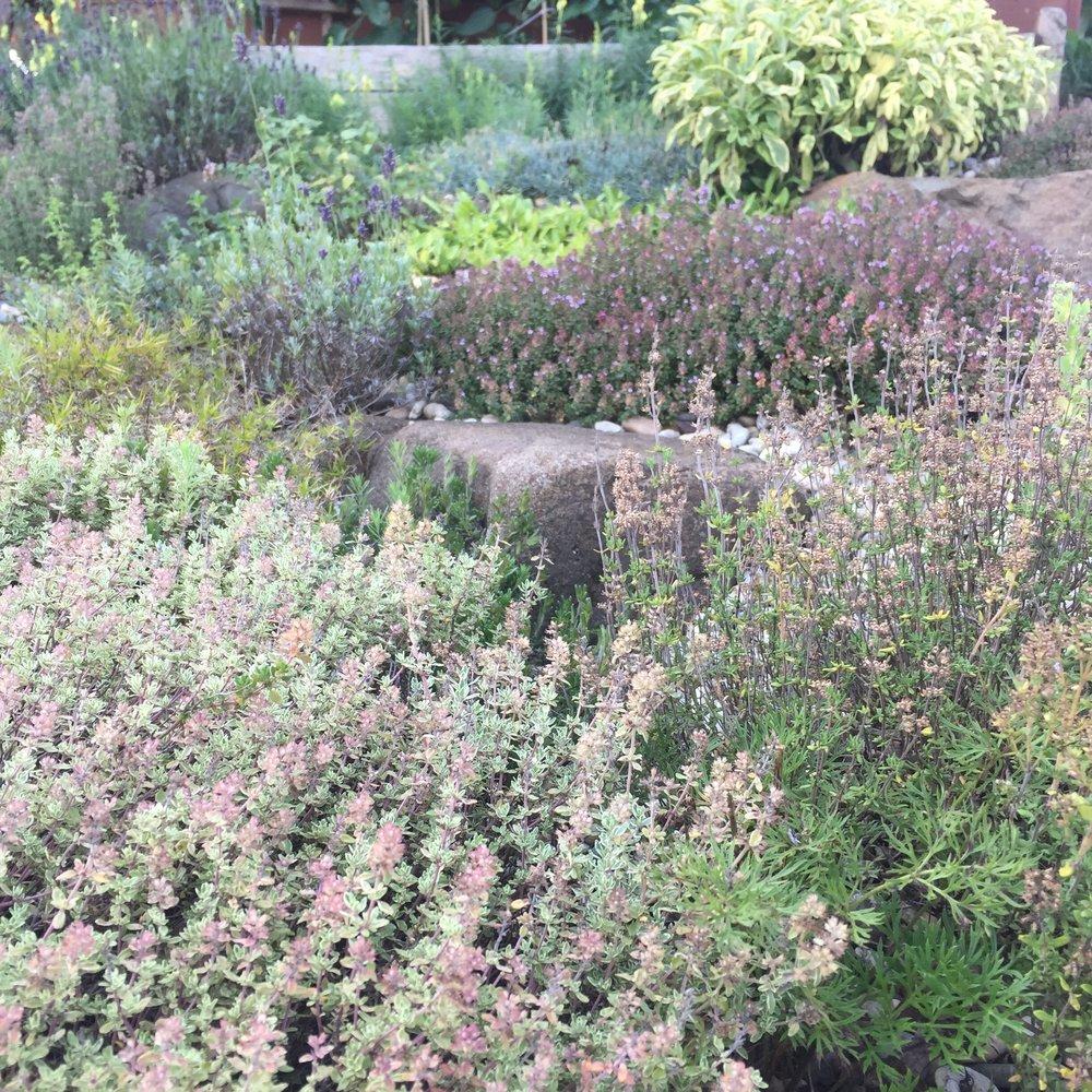 skalka zásobuje kuchyň čerstvými voňavými bylinkami celé léto