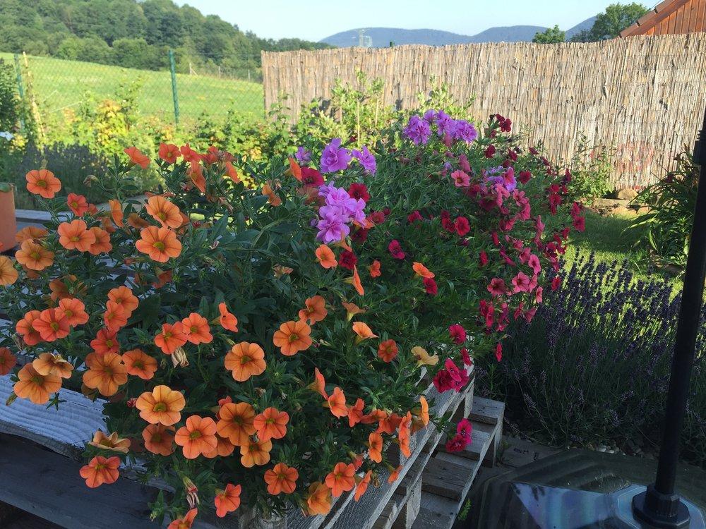 všechny okenní parapety i volné nádoby v létě zdobí pestré letničky